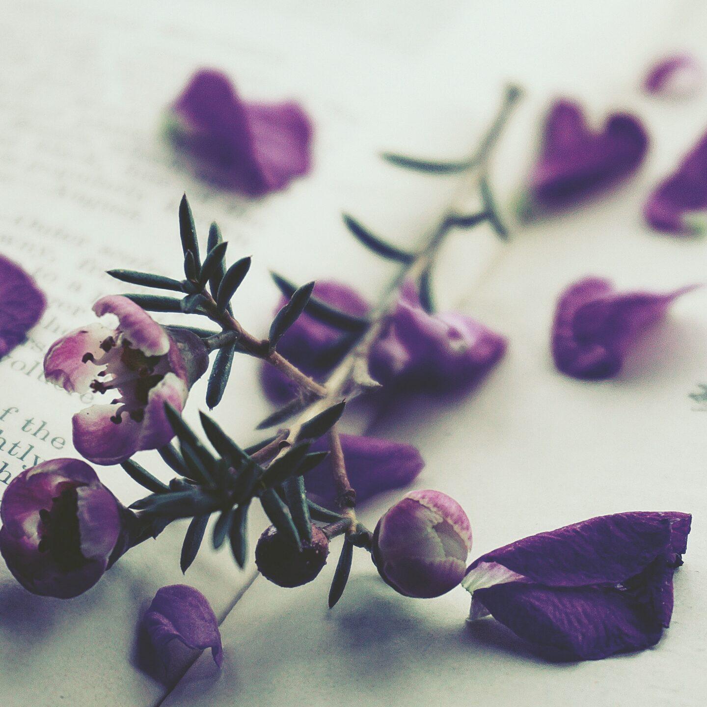 purple-petaled-flowers-on-opened-book-1781907
